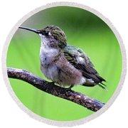 Shades Of Green - Ruby-throated Hummingbird Round Beach Towel