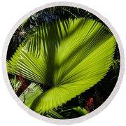Shadow On A Ruffled Fan Palm Round Beach Towel