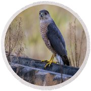 Shakerag Coopers Hawk Round Beach Towel