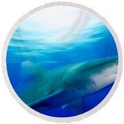 Shark In Rapid Motion Round Beach Towel
