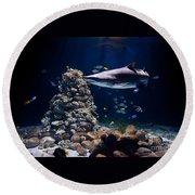 Shark In Zoo Aquarium Round Beach Towel