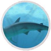 Shark Round Beach Towel