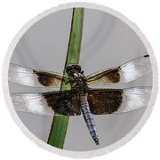 Sharp Focus Dragonfly Round Beach Towel