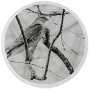 Sharp-shinned Hawk Black And White Round Beach Towel