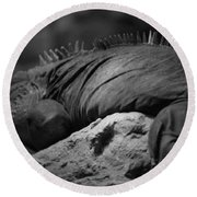 Shedd Aquarium Iguana Round Beach Towel