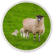Sheep And Lambs Round Beach Towel