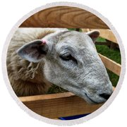 Sheep Four Round Beach Towel