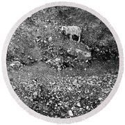 Sheep In Bw Round Beach Towel