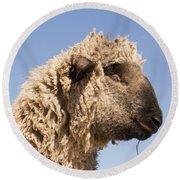 Sheep In Profile Round Beach Towel