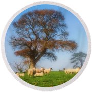 Sheep In Somerset - Impressions Round Beach Towel