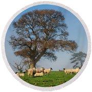 Sheep In Somerset Round Beach Towel