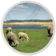 Sheep On Pasture Nature Farm Scene Round Beach Towel
