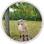 Happy Sheep Posing For Her Photo Round Beach Towel