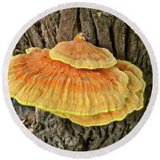 Shelf Fungus - Basidiomycota Round Beach Towel