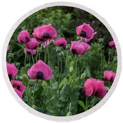 Shell Shaped Poppies Round Beach Towel