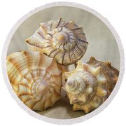 Shell Still Life Round Beach Towel