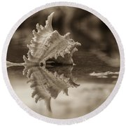 Shore Shell In Sepia Round Beach Towel