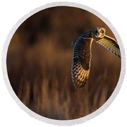 Short-eared Owl Banking Round Beach Towel