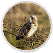 Short-eared Owl In Tree Round Beach Towel