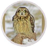 Short-eared Owl Round Beach Towel