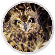 Short Eared Owl Round Beach Towel