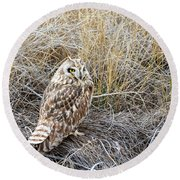Short Eared Owl Round Beach Towel by Michael Chatt