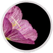 Showy Evening Primrose Round Beach Towel