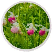 Showy Lady's Slipper Orchids Round Beach Towel
