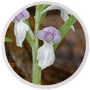 Showy Orchis Round Beach Towel