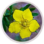 Shrubby Cinquefoil On Iron Creek Trail In Sawtooth National Wilderness Area-idaho  Round Beach Towel