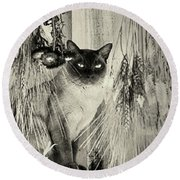 Siamese Cat Posing In Black And White Round Beach Towel