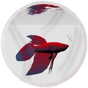 Siamese Fighting Fish Round Beach Towel