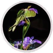 Siberian Iris And Luna Moth Round Beach Towel