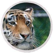 Siberian Tiger 2 Round Beach Towel