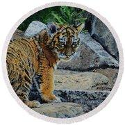 Siberian Tiger Cub Round Beach Towel