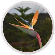 Side View Of A Beautiful Bird Of Paradise Flower  Round Beach Towel