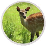 Sika Deer Omagh Round Beach Towel