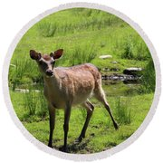 Sika Deer Water Hole Omagh Round Beach Towel