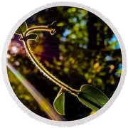 Silhouette Of Climbing Vine On A Sunny Afternoon Round Beach Towel