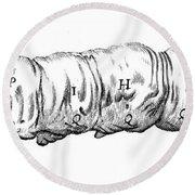 Silkworm, Malpighi, 1686 Round Beach Towel