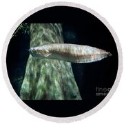 Silver Arowana Fish In Paludarium Round Beach Towel