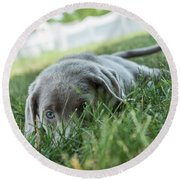 Silver Labrador Retriever  Round Beach Towel