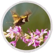 Silver Spotted Skipper Landing On Blooms                 August               Indiana Round Beach Towel