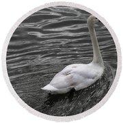 Silver Swan Round Beach Towel