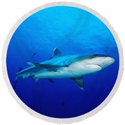 Silvertip Shark In Thailand Round Beach Towel