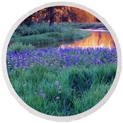 Silvery Lupine Round Beach Towel