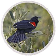 Sing Me A Song, Red-winged Blackbird Round Beach Towel