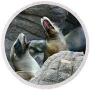 Singing Sea Lions Round Beach Towel