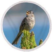 Singing Sparrow Round Beach Towel