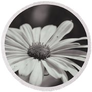 Single Daisy Bw Round Beach Towel
